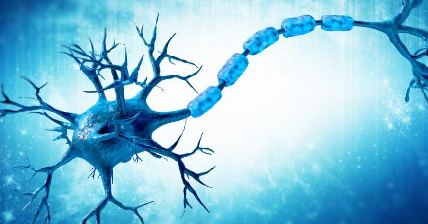 Remyelination in MS